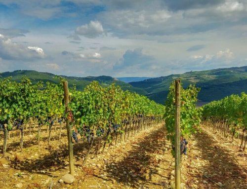 Weinwandern in der südlichen Toskana
